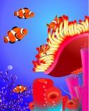 与珊瑚的小丑鱼 图库摄影
