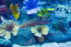 与珊瑚的水下的世界 图库摄影