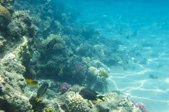 与珊瑚的水下的风景 库存照片