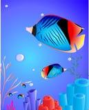 与珊瑚的鱼 库存照片
