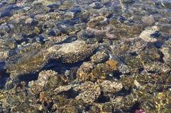 与珊瑚的水下的海背景 库存图片