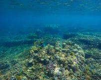与珊瑚的水下的风景在海底 在清楚的大海的海洋生活 免版税库存照片