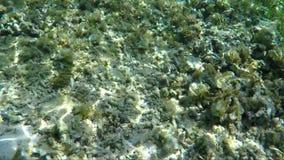 与珊瑚礁殖民地的水下的词 股票录像