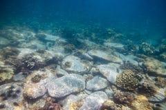 与珊瑚礁的石堆和学校在海钓鱼 库存照片