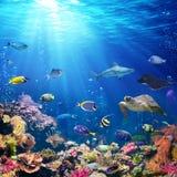 与珊瑚礁的水下的场面 免版税库存照片