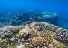 与珊瑚礁的水下的风景在阳光下 海洋生物圈 免版税库存照片