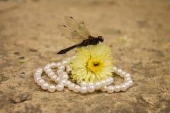 与珍珠小珠和花的黑蜻蜓 库存图片