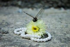 与珍珠小珠和花的黑蜻蜓 库存照片
