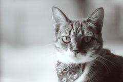与班丹纳花绸的猫 免版税库存图片
