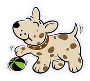 与球的嬉戏的小狗 免版税库存照片