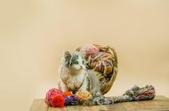 与球的小的滑稽的小猫编织在多种颜色 库存图片