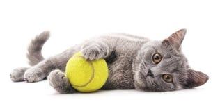与球的灰色猫 免版税库存图片