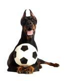 与球的狗在空白背景 免版税库存图片