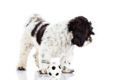 与球的狗在空白背景 免版税库存照片