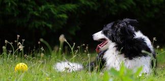 与球的狗在阳光下 免版税库存照片