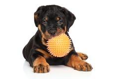 与球的Rottweiler小狗在白色 免版税库存图片