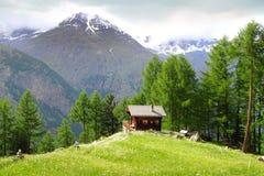 与瑞士山中的牧人小屋的美好的农村风景在策马特附近 免版税库存图片