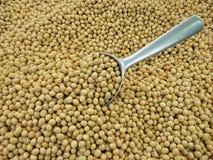 与瓢的大豆豆在上面 免版税库存照片