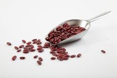 与瓢的红色扁豆 免版税库存照片