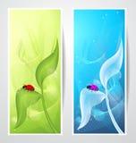 与瓢虫的创造性的横幅在叶子 库存图片