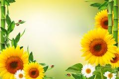与瓢虫的春天花卉背景 库存例证