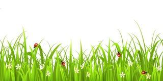 与瓢虫的草 免版税库存照片