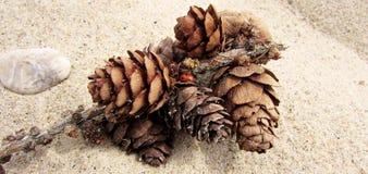 与瓢虫的说谎在沙子的自然本底和爆沸 免版税图库摄影