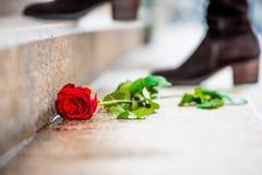 与瓣和绿色的美丽的红色玫瑰在地面,在背景的妇女起动上离开 图库摄影