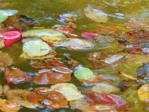 与瓣树下落的花和叶子装饰背景纹理的宏观照片在水庭院喷泉的 库存照片
