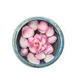 与瓣的桃红色玫瑰在蓝色碗用水,隔绝在白色背景 免版税库存图片