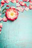 与瓣的桃红色罗莎花在蓝色绿松石破旧的别致的背景,顶视图,文本的地方,垂直 免版税库存图片