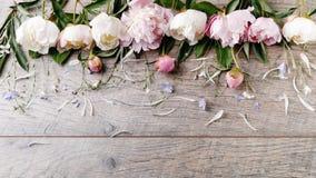 与瓣花的精美白色桃红色牡丹和在木板的白色丝带 顶上的顶视图,平的位置 复制空间 生日, 库存照片