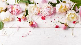 与瓣花的精美白色桃红色牡丹和在木板的白色丝带 顶上的顶视图,平的位置 复制空间 生日, 库存图片