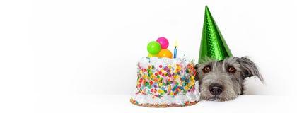 与生日蛋糕网横幅的狗 免版税库存照片