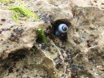 与生物的岩石 库存照片