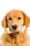 与生皮鞭骨头的狗 免版税库存照片