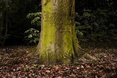 与生苔吠声的树 库存照片