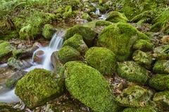 与生苔岩石的水小河在Muniellos生物圈储备 库存照片