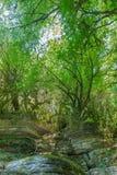 与生苔树的狂放的岩石 免版税图库摄影