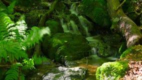 与生苔石头的森林小河 股票视频