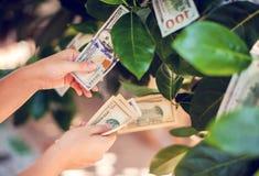 与生长在叶子的美金的金钱树 手收集星期一 免版税库存照片