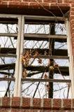 与生长在它外面的藤的老窗口 免版税库存图片