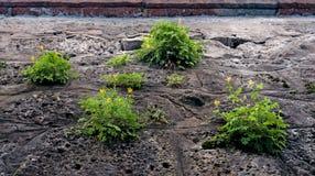 与生长在混凝土墙的草的抽象背景 免版税库存图片