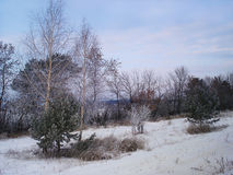 与生长沿领域的树和灌木的冬天风景 库存照片