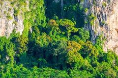 与生长热带树的岩石峭壁 图库摄影