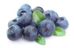 与生活的成熟蓝莓 免版税库存照片
