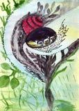 与生活种子的自然胶囊  库存图片