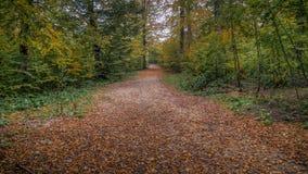 与用下落的叶子盖的路的风景通过森林 免版税图库摄影