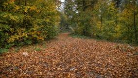 与用下落的叶子盖的路的风景通过森林 免版税库存图片