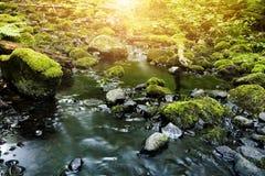 与用新鲜的绿色青苔盖的石头的小河 免版税图库摄影